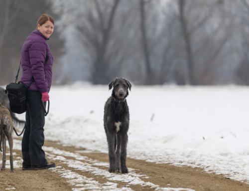 Sonntagsspaziergang mit den Hunden